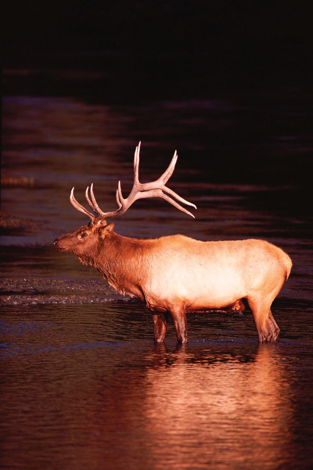 Hunting Elk Creek Ranch Meeker Colorado 81641