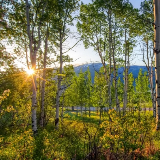 Dakota Ridge Homesite - The Ultimate Trifecta for your Future Dakota Ridge Home