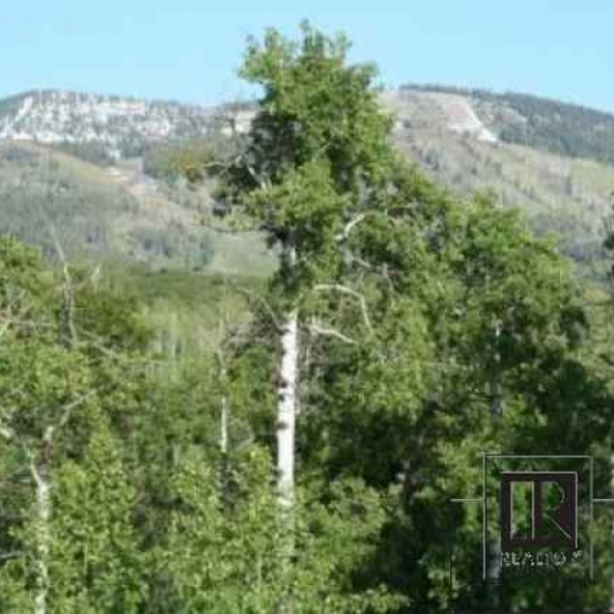 Wooded Homesite - Perfect building site just above town with great ski area views, trees and sun on .45 acres